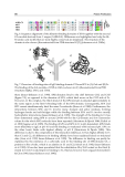 Protein Purification Part 8