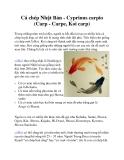 Cá chép Nhật Bản - Cyprinus carpio (Carp - Carpe, Koi carp)