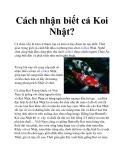 Cách nhận biết cá Koi Nhật?