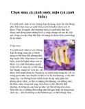 Chọn mua cá cảnh nước mặn (cá cảnh biển)