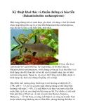 Kỹ thuật khai thác và thuần dưỡng cá hỏa tiễn (Balantiocheilos melanopterus)
