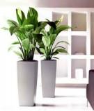 Những điều cần tránh khi trồng cây cảnh trong nhà