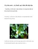 Cây dừa nước - cây thuốc quý chữa tiểu tiện đục