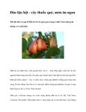 Đào lộn hột - cây thuốc quý, món ăn ngon