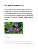 Hoa mua - Hoa của núi rừng