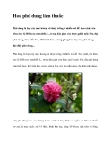 Hoa phù dung làm thuốc