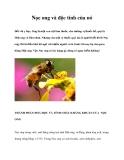 Nọc ong và độc tính của nó