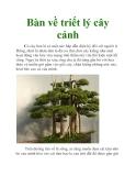 Bàn về triết lý cây cảnh