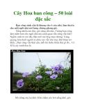 Cây Hoa ban công – 50 loài đặc sắc