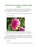 Một số loài hoa nổi tiếng với những ý nghĩa của nó