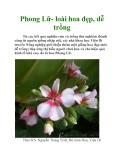 Phong Lữ- loài hoa đẹp, dễ trồng