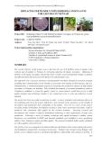 """Báo cáo nghiên cứu khoa học """" REPLACING FERTILISER N WITH RHIZOBIAL INOCULANTS FOR LEGUMES IN VIETNAM """""""