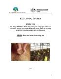 Dự án nghiên cứu nông nghiệp:  Xây dựng chiến lược nhằm tăng cường khả năng cạnh tranh của các doanh nghiệp vừa và nhỏ nông thôn trong chuỗi giá trị nông nghiệp: trường hợp ngành thức ăn chăn nuôi - MS10 '