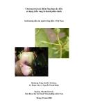 Chương trình cải thiện tổng hợp cây điều sử dụng kiến vàng là thành phần chính - Sách hướng dẫn cho người trồng điều ở Việt Nam