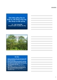 """Báo cáo nghiên cứu nông nghiệp """" Giới thiệu giống keo lai - quản lý, xây dựng vườn cây đầu dòng và nhân giống """""""