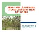 """Báo cáo nghiên cứu nông nghiệp """" BỆNH VÀNG LÁ GREENING (HUANGLONGBING) TRÊN CÂY CÓ MÚI """""""
