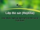 Lớp bò sát (Reptilia)