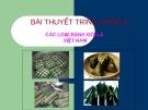 Các loại bánh lá ngón ở Việt Nam