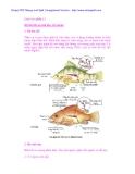 Tài liệu sinh học: Loài cá