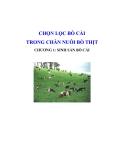 Chọn lọc bò cái trong chăn nuôi bò thịt