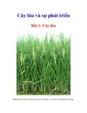 Cây lúa và sự phát triển