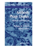Antibody Phage Display Methods and Protocols