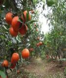 33 câu hỏi đáp về trồng và chăm sóc cây ăn quả