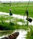 Tác động xã hội vùng của các khu công nghiệp ở Việt Nam