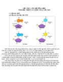 Cấu trúc cơ chế tổng hợ tính đặc trưng và chức năng của ADN