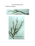 Hình vi mẫu thực tập thực vật học