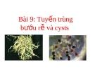 Tuyến trùng bướu rễ và cysts