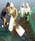 Luận văn ảnh hưởng của các biện pháp kỹ thuật nuôi tôm sú  (Penaeus monodon) thâm canh đến môi trường bùn đáy ao