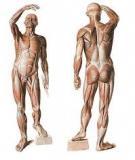 Bài giảng Giải phẫu học tập 1 - ĐH Y khoa Thái Nguyên