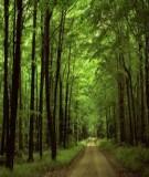 Các biện pháp bảo vệ tài nguyên rừng ở Việt Nam