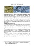 Tài liệu kỹ thuật chăn nuôi rắn mối