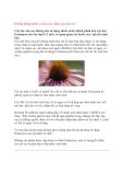 Không dùng thuốc có hoa cúc chữa cảm cho trẻ