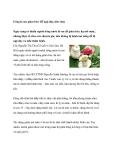 Uống lá sen giảm béo: Dễ ngộ độc, tiêu chảy