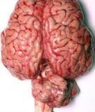 10 trợ thủ đắc lực cho não bộ