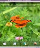 Hướng dẫn giả lập WebOS trên Linux
