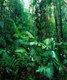 Báo cáo nhóm đề tài:  Đa dạng sinh học rừng mưa nhiệt đới