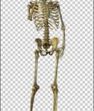 Giải pháp mới điều trị bệnh loãng xương