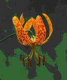 Kỹ thuật chụp hoa, lá, cành