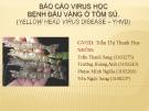 Báo cáo virus học bệnh đầu vàng ở tôm sú
