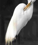 Nghệ thuật chụp chim