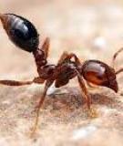Bốn cách phòng tránh côn trùng khi đi dã ngoại
