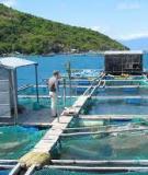 Sử dụng chế phẩm sinh học trong trồng trọt, chăn nuôi và nuôi trồng thủy sản