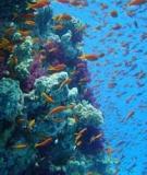 Rạn san hô Việt Nam – Nâng cao chất lượng cuộc sống ven bờ