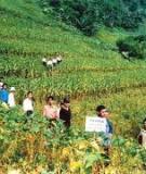 Canh tác bền vững trên đất dốc