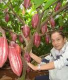 Kỹ thuật trồng và bón phân cho cây ca cao