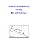 Black and White Butterfly Drawing Tips and Techniques
